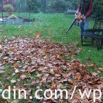 Autumn leaf clearing_3