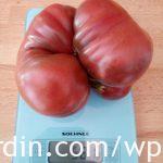 Tomato Noir de Crimea