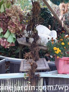 Bare geranium roots drying