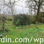Hedging inside the garden
