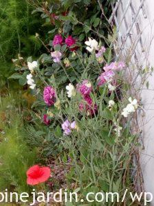 Sweet peas with roses, poppies and fennel