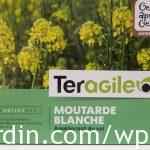 Engrais vert_Moutarde blanche_White mustard
