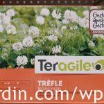 Engrais vert_Trèfle blanc nain_Short white clover