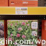 Engrais vert_Trèfle violet_Short red clover